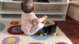Gatinho fofinho tenta brincar com bebé