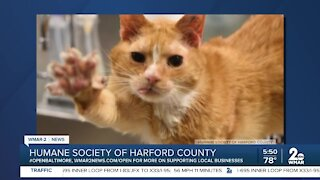 Jay the cat up for adoption at the Humane Society of Harford County