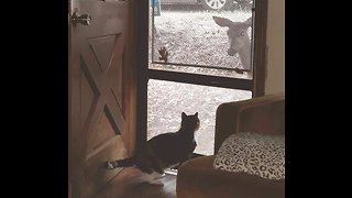 Friendly Deer Wants Cat To Come Out And Play