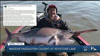 Massive Paddlefish Caught At Keystone Lake