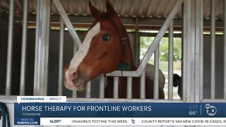 Horse therapy for front line workers
