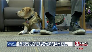 Reintroduced bill would pay for service dogs for vets with PTSD
