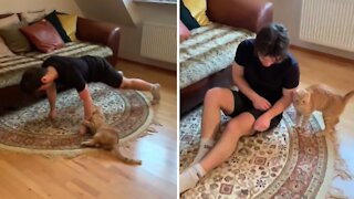 Cat attacks owner every time he tries to work out