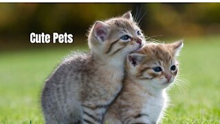 cute pets and funny animals make your day