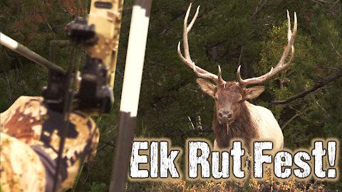 Public land bonanza! Elk hunting DIY
