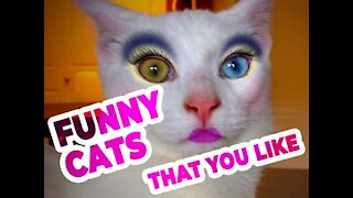 Funny Cat Video - Laughing Cat Video