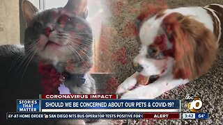 People infected with COVID-19 could possibly pose a danger to pets