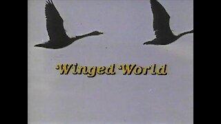 Winged World