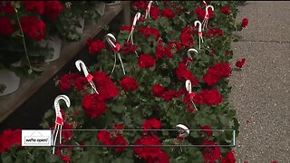 Outdoor flower shop offers last-minute Mother's Day gifts