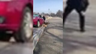 Police officer helps rescue deer trapped under vehicle in Southfield