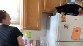 Over-protective cat won't let woman near dishes