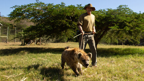 My Hyena Attacks Everyone But Me | BEAST BUDDIES