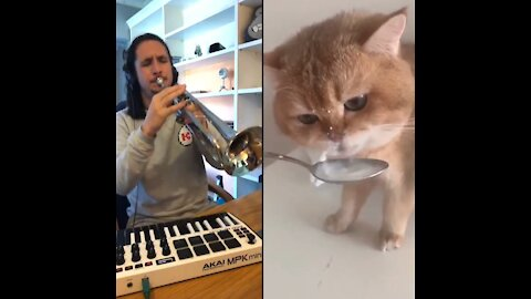 The Kiffness X Numnum Cat ♥