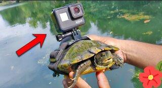 BEST GoPro on a Turtle! Swimming underwater