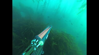 Spearfishing for Rockfish and Lingcod