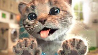 kitten ready cute
