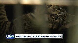 Cleveland APL waives adoption fees for senior pets, finds more than 50 forever homes
