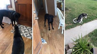 Clever dog helps house train puppy