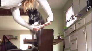 Cat is better trained than most dogs