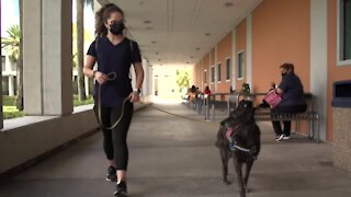 The Rebound: Covid sniffing dogs