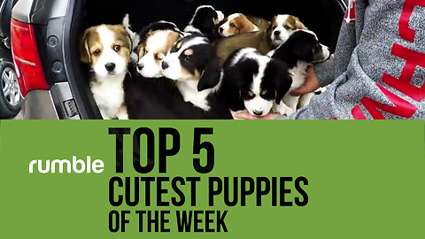 Rumble Virals presents the top 5 cutest puppies of the week!