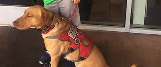 Las Vegas family with service dog tossed from restaurant, investigation launched