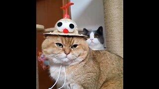 Funny Cat Moment