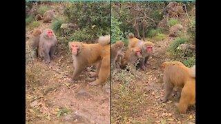 Best Monkey Moments | Poor Monkeys and young girl little monkey