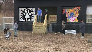 Dog park bar officially opens in Tremont