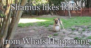 Shamus likes Balls!