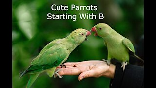 Parrots Green Plumage Starting With B