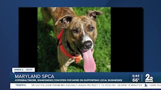 Mandy the dog is up for adoption at the Maryland SPCA