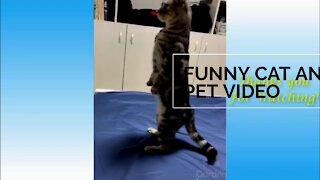 funny cats doing funny things