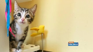 Maryland SPCA - Pet Picture Tips