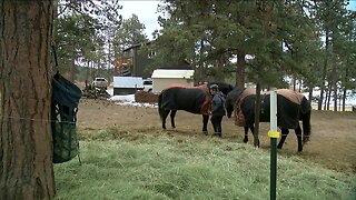Rural communities in Colorado come together amid coronavirus outbreak