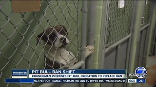 Denver council member proposes lifting pit bull ban in the city