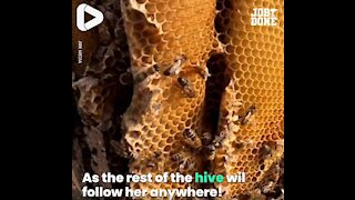 Safely Removing Honeybees From A Chimney