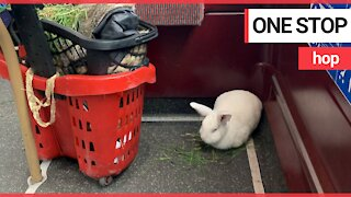 Commuters are greeted by a rabbit on a bus