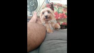Puppy my love