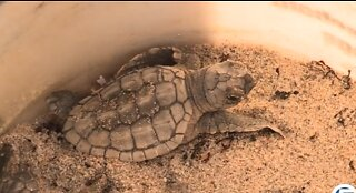 Educators learn about Delray Beach's turtle-protection program