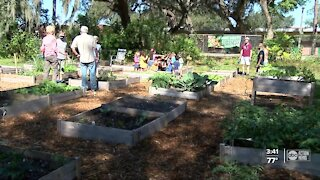 Tampa church creates community garden as a safe place to socialize