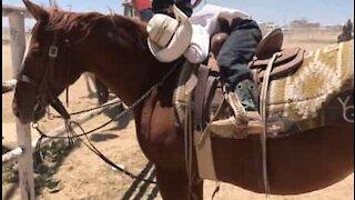 Little cowboy falls asleep on horse