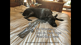 Another Great Dane Use For Duct Tape ~ Duvet Repair