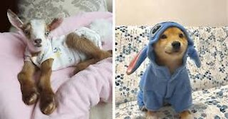 Pets That Will Absolutely Brighten Up Your Day 😍
