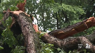 Storm topples trees in Howard County