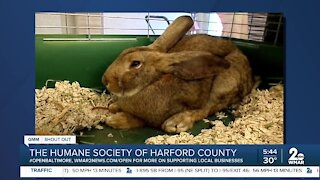 Pets up for adoption at the Humane Society of Harford County