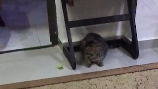 Playing with the cat at home