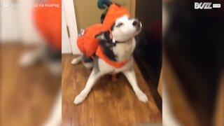Questi cani sono pronti per Halloween