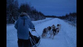 A Husky Dog Sledding with Transportation and Photos Service in Fairbanks, Alaska