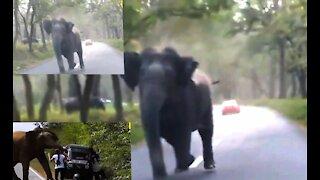 Elephants attack